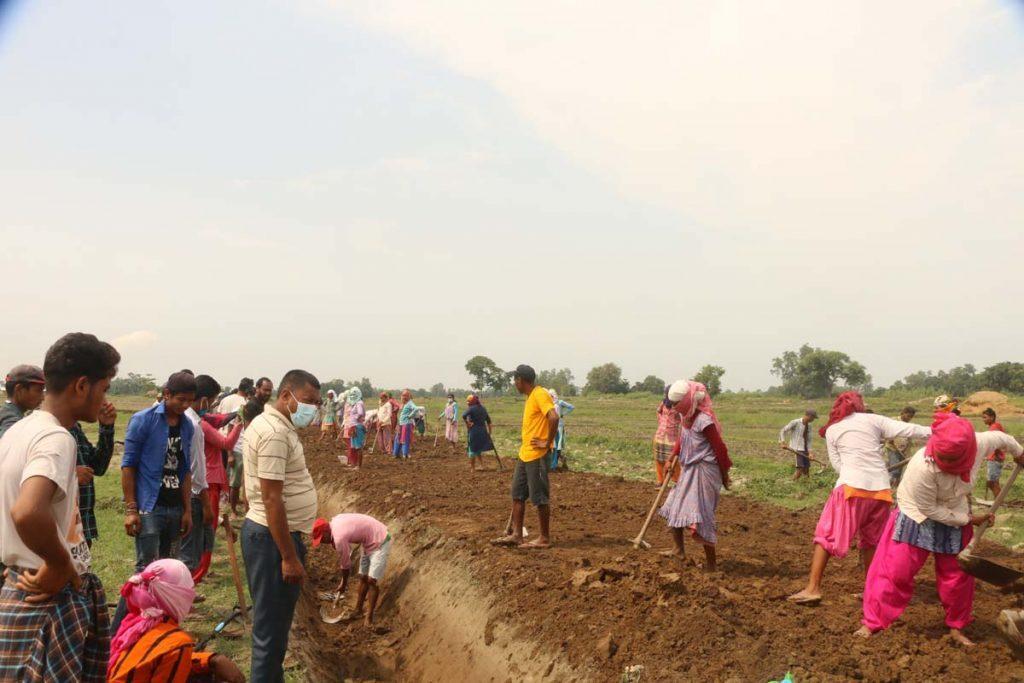 थारु समुदायमे सामुहिक काम : बेगारी